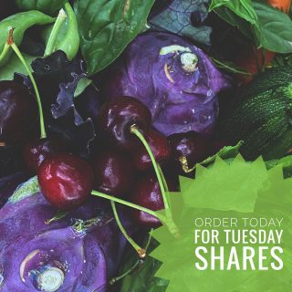 Don't forget to place your order by 11:59pm today to pick up shares at one of our Tuesday Fresh Stop locations. 🍒  Visit cityfresh.org to order today. 🍓  #cityfresh #csa #eatlocal #shoplocal