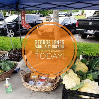 Catch Farm Manager Pete @oberlinfarmersmarket this morning! 🧑🌾 Come on down and get yourself some Intruder Green Bell Pepper starts and cauliflower.    🚨 CALLING ALL VOLUNTEERS 🚨 George Jones Memorial Farm is in need of some extra set of hands this season. If you're interested in helping out and getting your hands dirty, send us a message or visit the market and sign up today. 🙌