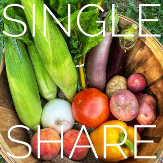 Hot-cha-cha shares comin' atcha this week: Single ➡️ Family. Height of summer goodness turning to thoughts of fall… sign up for week 13 at cityfresh.org! 🍓 - #cityfresh #csa #eatlocal #shoplocal