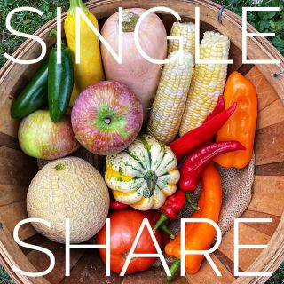 Single share ➡️ Family share. It's lucky week 13! These world-changing veggies are densely nutritious. Be sure to join us for week 14 by ordering today at cityfresh.org 🍓 #cityfresh #csa #eatlocal #shoplocal