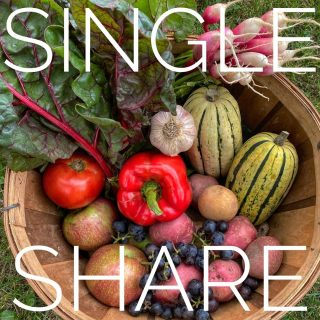 Single share ➡️ Family share. We've got just about every color of the rainbow covered in this week's shares!   Join us for more chromatic nourishment in our upcoming share weeks by ordering at cityfresh.org 🍓  #cityfresh #csa #eatlocal #shoplocal