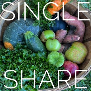 Single share ➡️ Family share. Both shares have dense, voluminous heads of Hampton lettuce, a variety of summer and winter squash, versatile sweet taters, and MORE!   We've got a month left of our regular season! Get in on these goods! Order at cityfresh.org 🍓  #cityfresh #csa #eatlocal #shoplocal