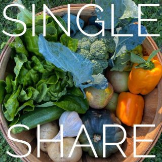 Single share ➡️ Family share. The season is slowly winding to a close, but we've still got an amazing variety of veggies in both shares! Everything you'd need for a seasonal homemade soup and salad combo right here!   Order for next week at cityfresh.org 🍓  #cityfresh #csa #eatlocal #shoplocal