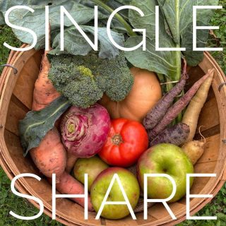 Single share ➡️ Family share. Thank goodness for these brassicas! 🙌 We've got broccoli, collards, and huge heads of Napa cabbage in this week's shares.  Join us for our remaining weeks (and our bonus/holiday weeks!) at cityfresh.org 🍓  #cityfresh #csa #eatlocal #shoplocal