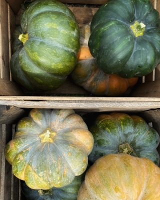 The fairytale pumpkins in this week's family shares are extraordinary! Also known as Musquee de Provence, this variety has an extra long shelf life. These can be prepared as you would any winter squash. Find a recipe for pumpkin risotto link in bio.   Don't forget to order for next week at cityfresh.org! 🍓  #cityfresh #csa #eatlocal #shoplocal