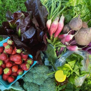 Week 1 Family Shares are here with all your early season favorites! Beets and radishes and broccoli, oh my! Missed it? Sign up for Week 2 at cityfresh.org! 🍓  #cityfresh #csa #eatlocal #shoplocal