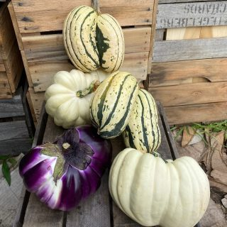 The squash are mutating! The squash are mutating!   Did you get a lucky conjoined squash or eggplant this week? Tell us in the comments below ⬇️  The Cleveland Heights Eco Fair is tomorrow from 11-3pm! We'll be there along with other great organizations doing important sustainability work in our communities. Come out and enjoy the family-friendly activities that the @clevelandheightsgreenteam organized!  Order your share for next week at cityfresh.org 🍓  #cityfresh #csa #eatlcoal #shoplocal