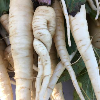 Who doesn't love a sweet lil parsnip? So elegant and curvy, yet ruddy and unpretentious. It's a commonsensical folksy vegetable. A little sweet, a little plain. Do you mash them? Stew them? Roast? What's your favorite way to prepare a parsnip?