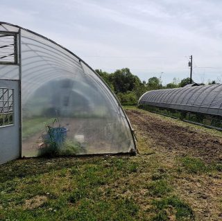 With the warm weather and high temperatures our hoop houses have been a little extra toasty as of late. ☀️   Farm manager Pete uses shade cloth to reduce sunlight and heat in the houses. Shade cloth comes in different colors and densities and is super important because not many plants can thrive in the 120 degree temperatures the hoop houses can reach. 🥵