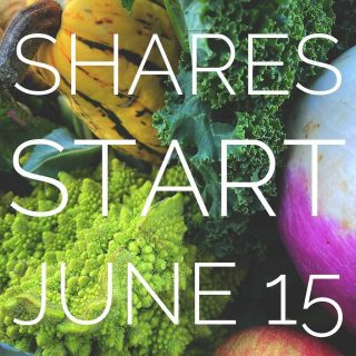 Have you ordered your City Fresh shares? The start of the season is right around the corner! 🍓  Order 5+ shares now through May 31st & receive $5 off your order. Use code SOFRESH at checkout. ✨   *does not apply to limited income shares*   #cityfresh #csa #vegetables #fruits #localbusiness #localagriculture #community